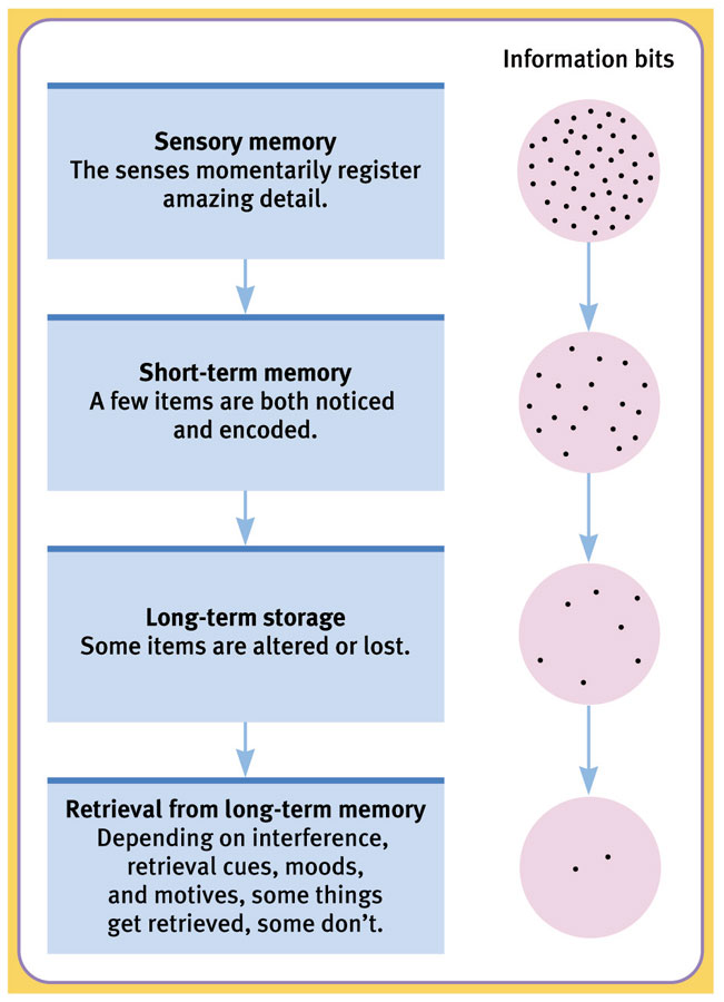 Stages of Memory Processing